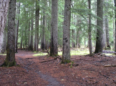 Click to see Lightbox Display of pictures from the Toutle Trail